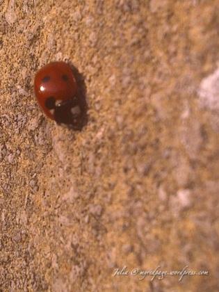 Wiltshire-20110323-00531-1