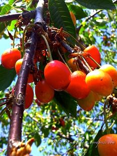 Juicy cherry