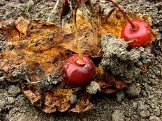 Fruity black cherry